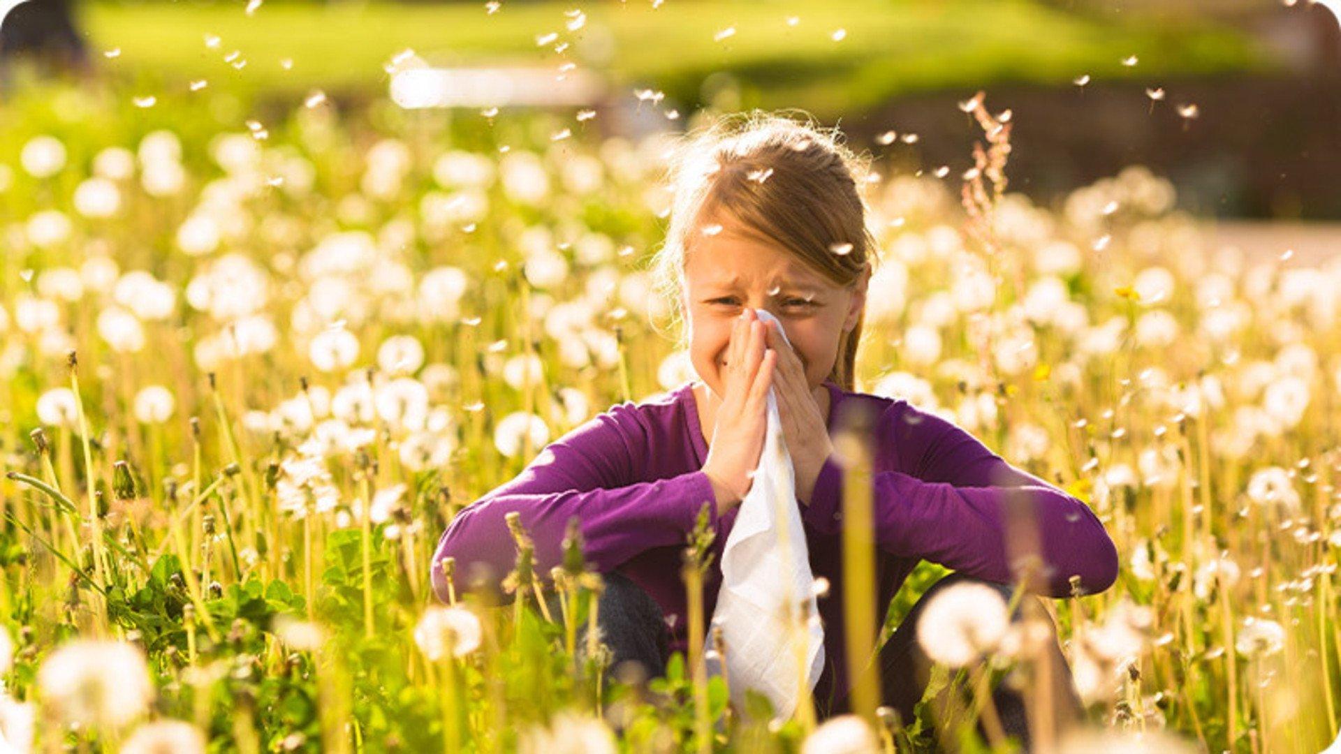 Die Nase als Eintrittspforte für Allergene